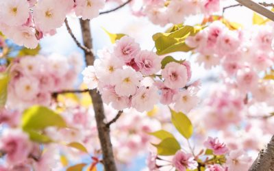 Springtime Strategies for Your Health