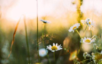 Ideas for a Healthier Spring!
